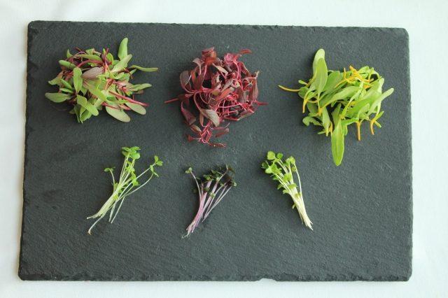 スプラウト野菜