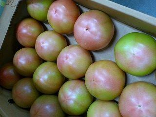 TSUKASA(ツカサ)のトマト