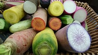 彩の綺麗な根菜類