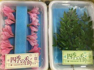桜 ツツジ