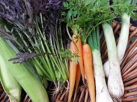 冬のこだわり野菜
