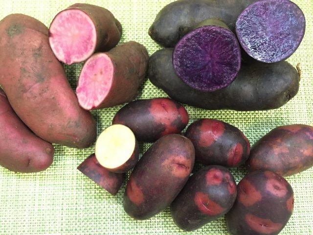 「ノーザンルビー」写真左側の赤色 「シャドークイン」写真右側の紫色