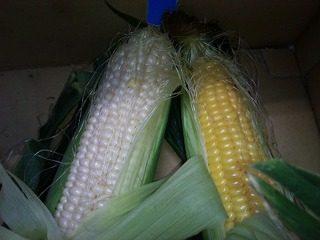 白いトウモロコシ「ピュアホワイト」 業務用野菜のTSUKASA