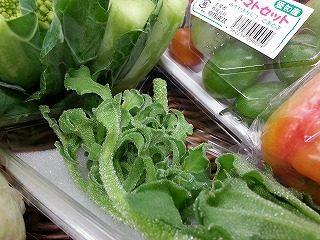 アイスプラント|業務用野菜のベジクル