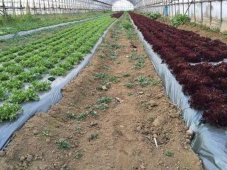 有機栽培産地