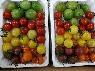 カラフルなミニトマトMIXやマイクロトマト