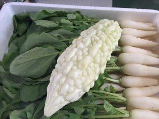 沖縄野菜 島やさい 業務用野菜のTSUKASA