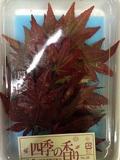赤もみじ、イチョウの葉 柿の葉、栗の葉