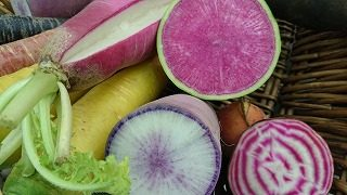 彩良い根菜類