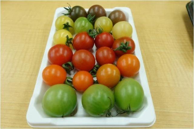 彩ミニトマト