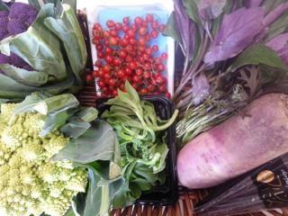 ・紫カリフラワー ・橙カリフラワー ・ロマネスコ ・アイスプラント ・紅しぐれ大根 ・式部草 ・赤水菜