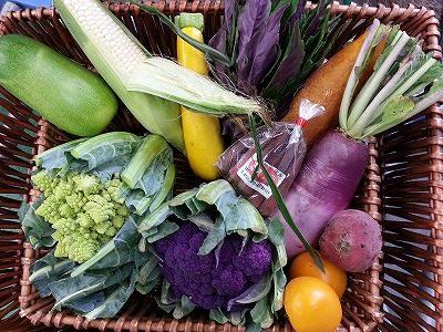 季節外れの冬野菜