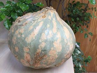 産直 熟成かぼちゃ