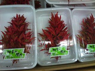 赤南天|業務用野菜のベジクル