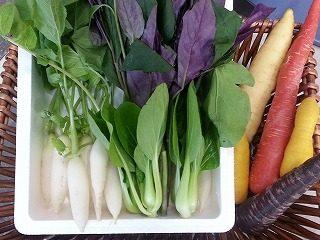 旬の彩野菜