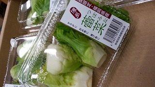博多つぼみ菜