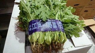 生食用 春菊