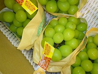 シャインマスカット 業務用野菜のTSUKASA