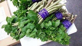 山菜のご案内です|業務用青果のTSUKASA
