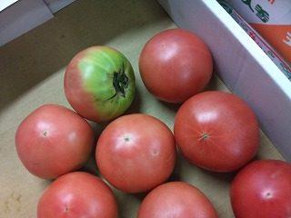 トマト|業務用野菜のベジクル