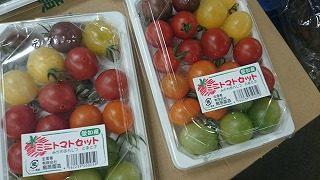 彩良いミニトマト