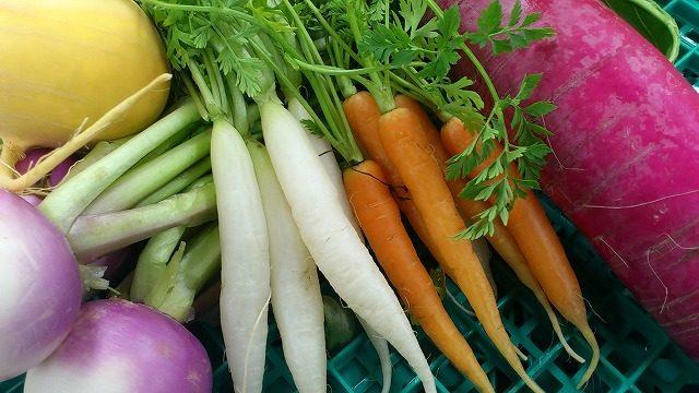 彩根菜のご紹介|業務用野菜のTSUKASA