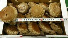 特大サイズ椎茸|業務用青果のTSUKASA