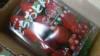 「冬苺(とちおとめ)」