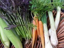 赤水菜|業務用青果のTSUKASA