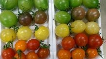彩りミニトマトMIX|業務用青果のTSUKASA