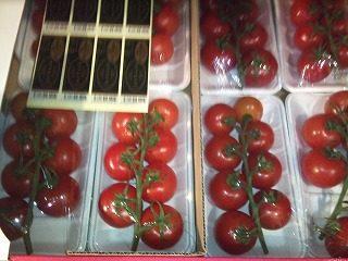 業務用トマト|業務用野菜のTSUKASA