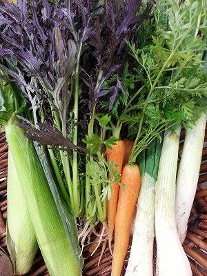 日本最大級の大田市場より、野菜を直送いたします!