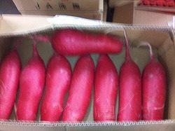 彩根菜のご紹介|業務用野菜のベジクル