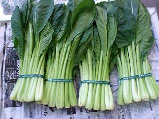 京野菜|業務用野菜のベジクル